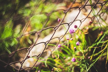 nature-flowers-summer-purple_small file
