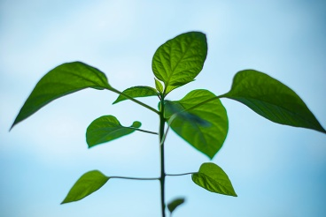 nature-plant-morning-green_small file